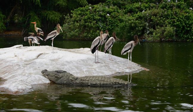 Ranganathittu_Bird_Sanctuary